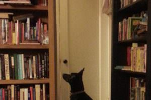 Trixie waits